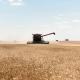 На Луганщині зібрали найбільший урожай за 30 років