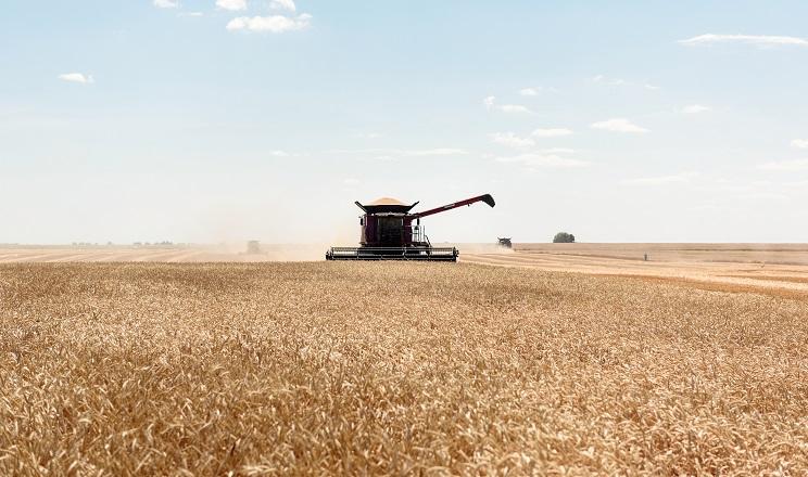 МХП у 2019 році отримав на 9% менший урожай зернових