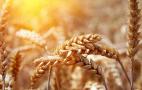Як змінилася географія експорту української пшениці