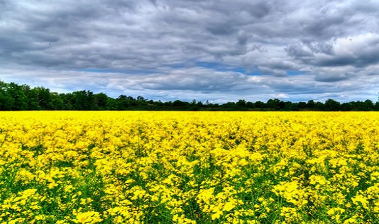 Розподіл фосфору залежить від способів основного обробітку ґрунту