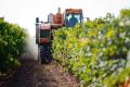 Експерт спрогнозував проблеми з реалізацією виноматеріалів
