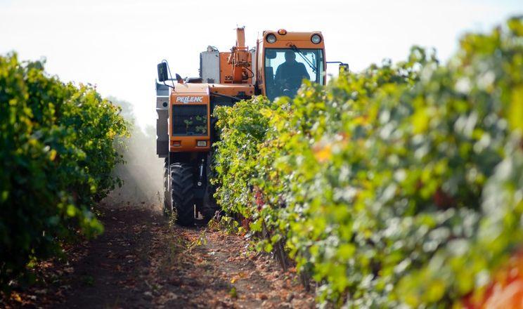 Виноградарям планують збільшити дотації