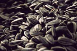 Січневі продажі насіння Brevant на 38% перевищили планові показники
