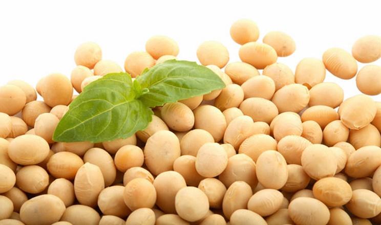 «Епіцентр Агро» реалізує проект з вирощування насіннєвої сої