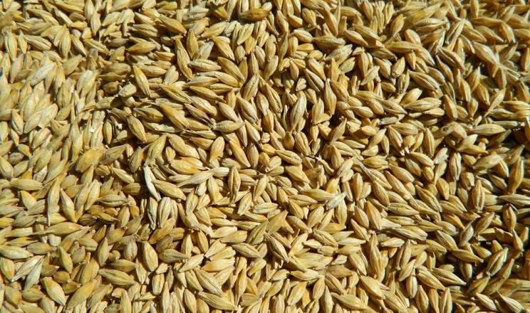 Китай нарощує імпорт українського зерна