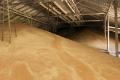 Валове виробництво зерна досягло майже 61 млн тонн
