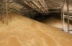 Цього року елеватори добре зароблять на сушінні зерна, - думка