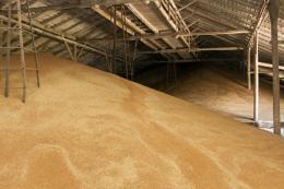 У Держрезерві недорахувалися зерна на 800 млн грн – відкрито кримінальне провадження