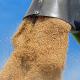 Фермерський елеватор на Рівненщині має намір вп'ятеро збільшити потужності зберігання