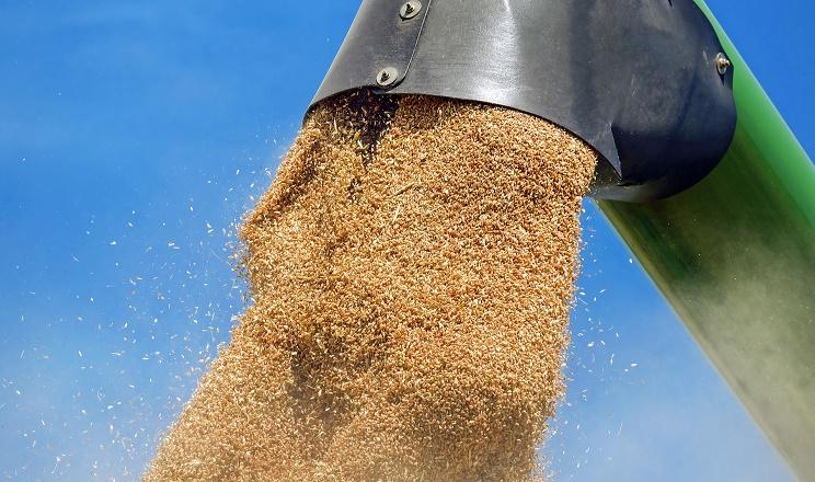 Під час розвантаження зерна з полімерних рукавів важливо контролювати швидкість процесу
