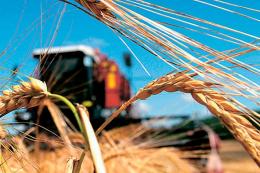 Жнива-2020: українські аграрії вже зібрали понад 43 млн тонн основних культур
