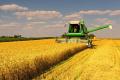 Виробництво продукції рослинництва на українських підприємствах скоротилося більш ніж на 20%
