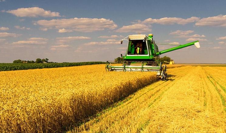Під час збирання рівень пошкоджень зерна залежить від режиму роботи молотильного апарата