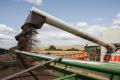 На Черкащині зібрали зерна в 2,5 раза більше, ніж торік