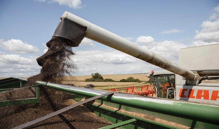 Урожайність ріпаку в «Агропродсервісі» коливається в межах 3-5 тонн/га