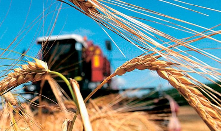 Урожайність ранніх зернових в «УПІ-Агро» значно перевищує середньоукраїнський рівень