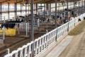 Харківська «Кутузівка» цілорічно утримує корів на глибокій підстилці