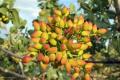 На півдні України планують висаджувати плантації мигдалю