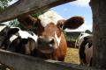 На Хмельниччині відкрили нову сімейну молочну ферму