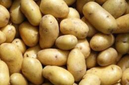 Картопля подорожчала через погоду та переробників
