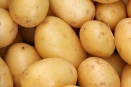 Першу українську картоплю прогнозують зібрати на початку квітня