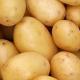 У Польщі очікують більший, ніж торік, врожай картоплі