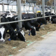 Цього року у Казахстані планують відкрити 25 потужних молочних ферм
