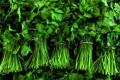 Виробники мікрогріну планують відкрити магазинчики овочів, фруктів і зелені
