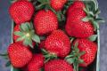 На Рівненщині польське підприємство вирощуватиме полуницю