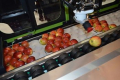 У UApple показали першого в країні робота-пакувальника яблук (ВІДЕО)