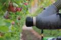 Kubota інвестує в яблукозбиральних роботів