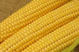 «Толсма Текнік» встановить лінію з переробки солодкої кукурудзи