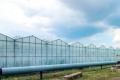 Найбільший потенціал в овочівництві – у тепличних комбінатів, – експерт