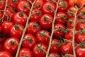 Біопрепарати підвищили врожайність томатів чері до 25%