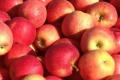 Ціни на яблука сильно різняться від якості