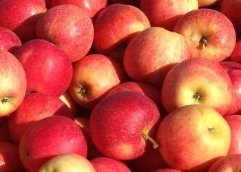 Яблука дорожчають через зростання попиту