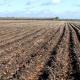 У Польщі очікують менший, ніж торік урожай овочів