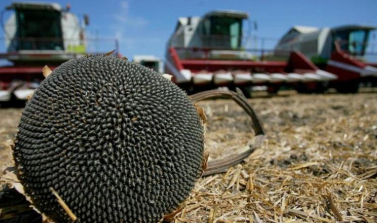 ПАЕК використовує пожнивні залишки соняшнику як добриво для ґрунту