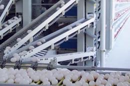 Етажерчасті системи збирання яєць найчастіше використовують за утримання курей у кліткових батареях на 2-4 яруси