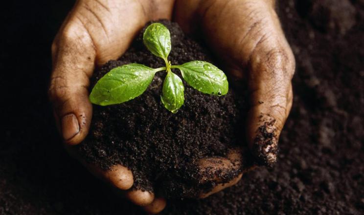 Поглинання марганцю рослиною залежить від рН ґрунту