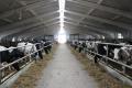 Агрофірма «Колос» орієнтується на будівництво роботизованої ферми