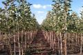 В Україні стало вп'ятеро менше розплідників плодових дерев