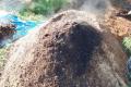 В Україні хочуть легалізувати утилізацію падежу тварин методом компостування