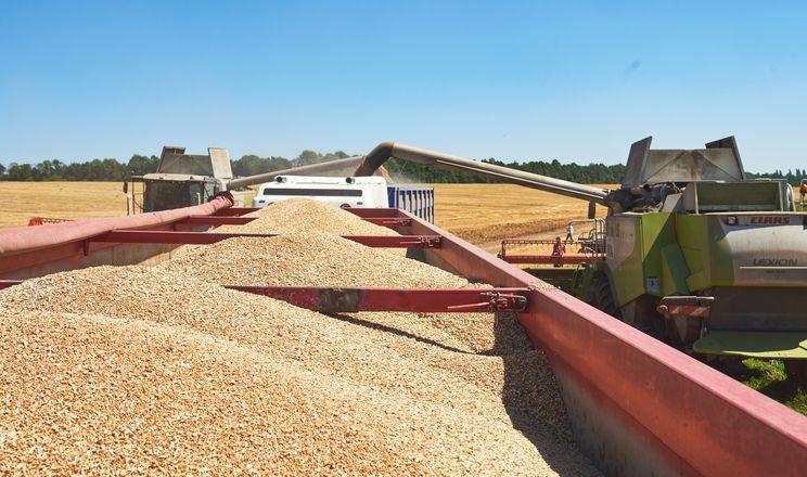Жнива ранніх зернових у «Контіненталі» пройшли без відчутних труднощів