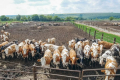 В Україні розглядають можливість створення кластера у птахівництві й тваринництві