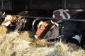 Парламент ухвалив у першому читанні законопроєкт про ветеринарну медицину та благополуччя тварин
