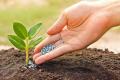 Науковці розповіли про результати застосування мікродобрив в умовах Степу і Лісостепу України