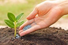 Недостатнє надходження в рослини кальцію може стати причиною токсичної дії мікродобрив