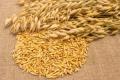 Понад 30% валового виробництва вівса припадає на Житомирщину