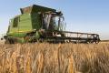 На Україну вкотре чекає рекордне виробництво зерна